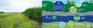 Zuidwest-Drenthe-Landbouwtransitie - Project_Landbouwtransitie-Zuidwest-Drenthe_001